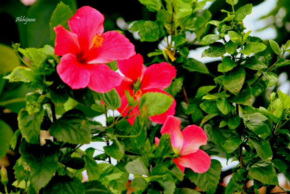 """""""Don't give your loved one a flower, because it too has a loved one! Let the flowers live!""""  by abhijnansanyal"""