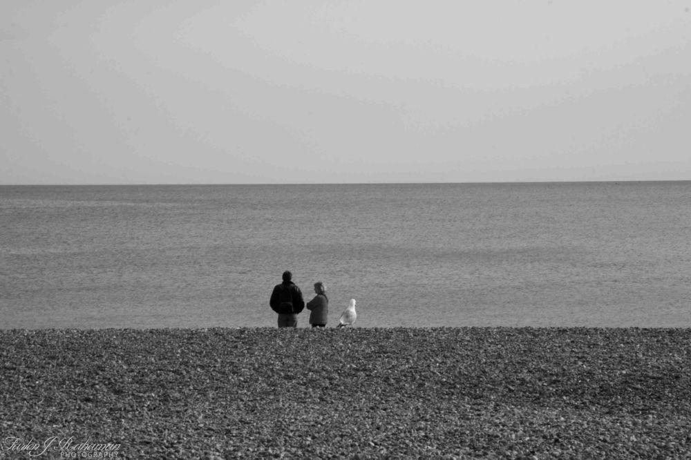 Brighton IMG_7598 by fjrahaman