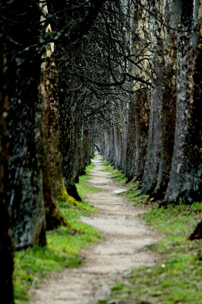 The road to peace. by yusufbilgic