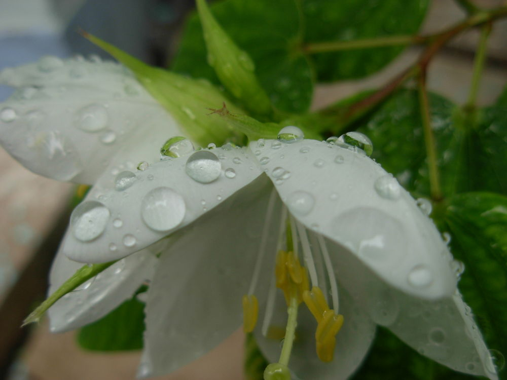The droplets have worked enough, now they need to rest!!!!!!!!!!!!!!!!!!!!!!!!!! by Sourajit Sarkar