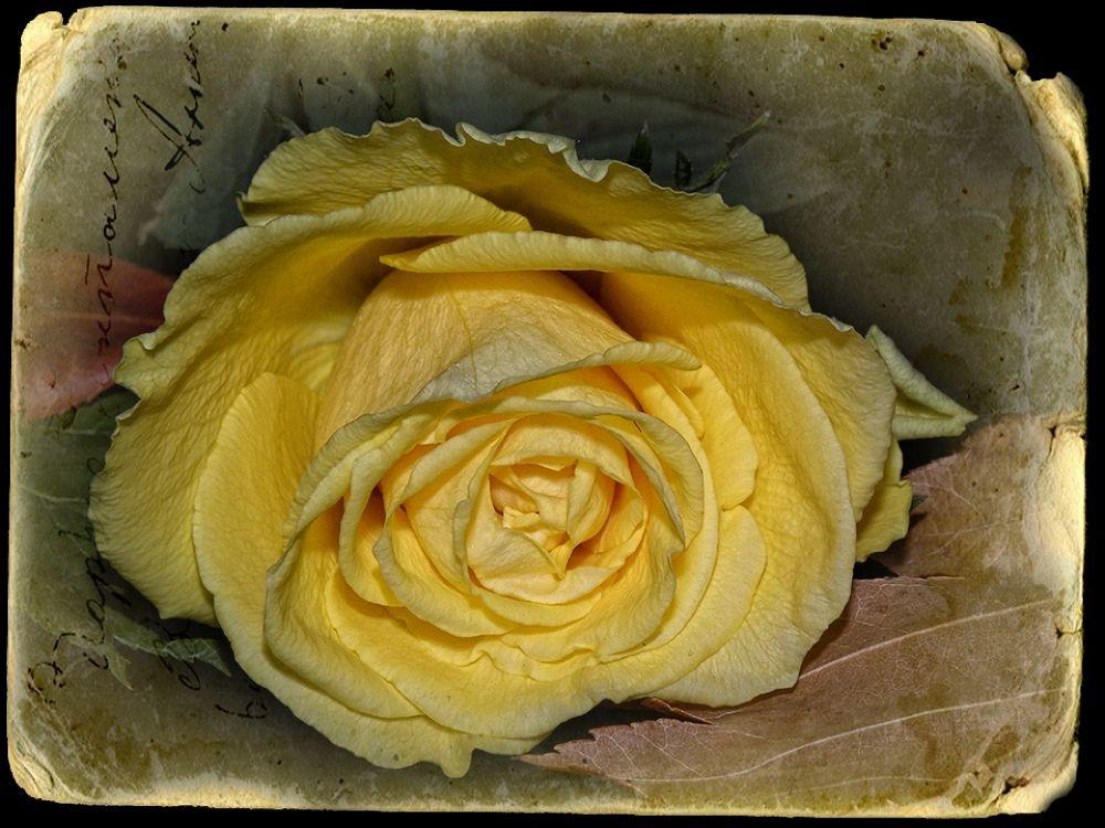 Vintage in Yellow by VessTa