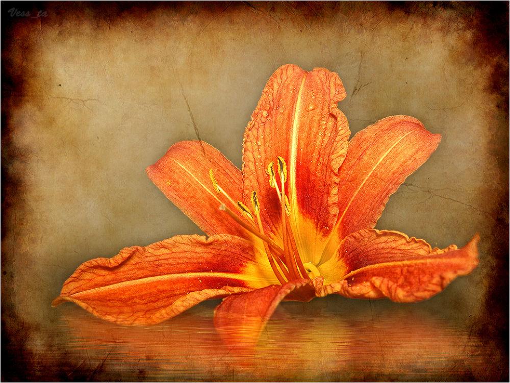 Fire Flower by VessTa