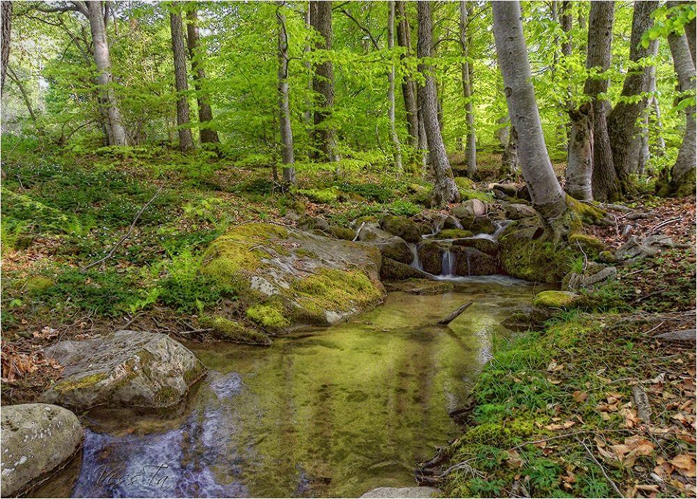 Green Forest by VessTa