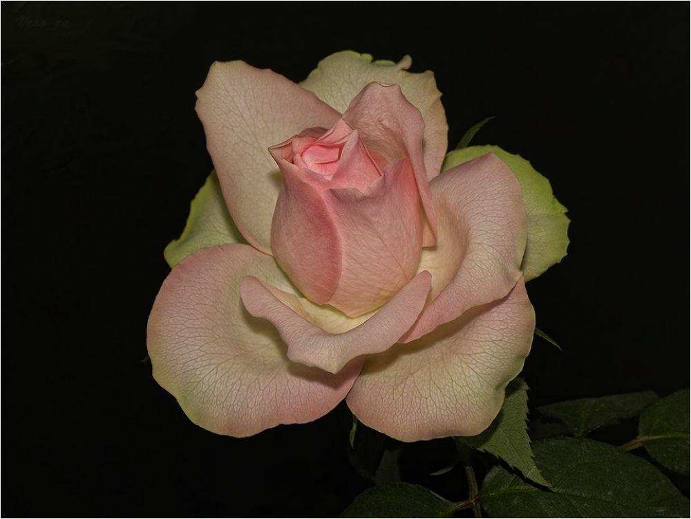 In Pink by VessTa