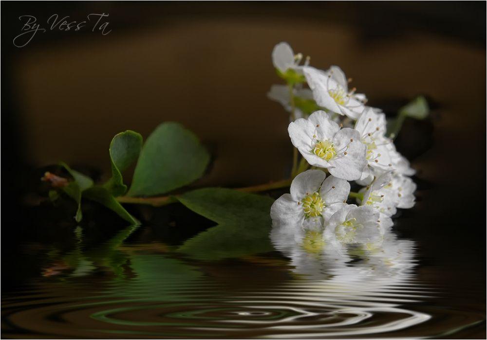 Spring by VessTa