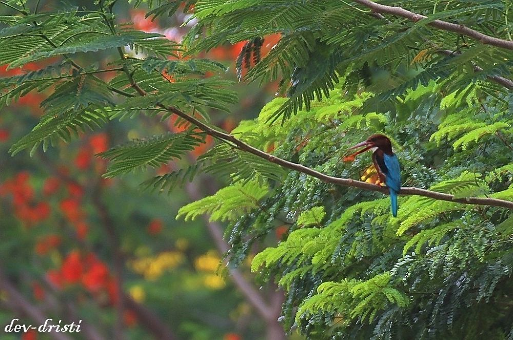 IMG_5578_filtered.jpgthe colours of nature by devdeepbanerjee9