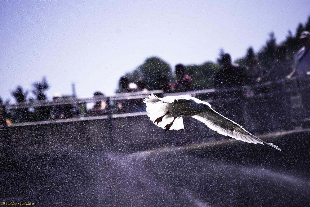 Freedom! by Kiran Kumar