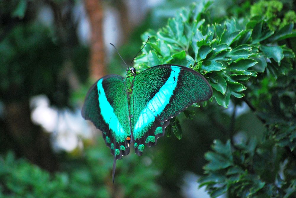 green nature by Kiran Kumar