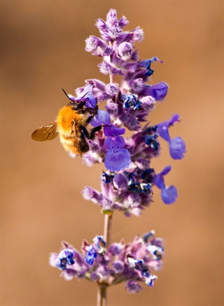 Flower-Bee-1Photo by blackstallionphotography