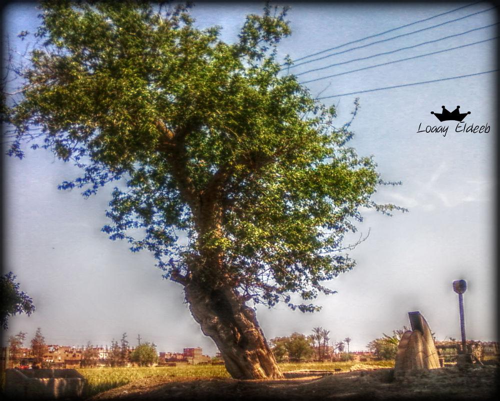 tree by loaayeldeeb