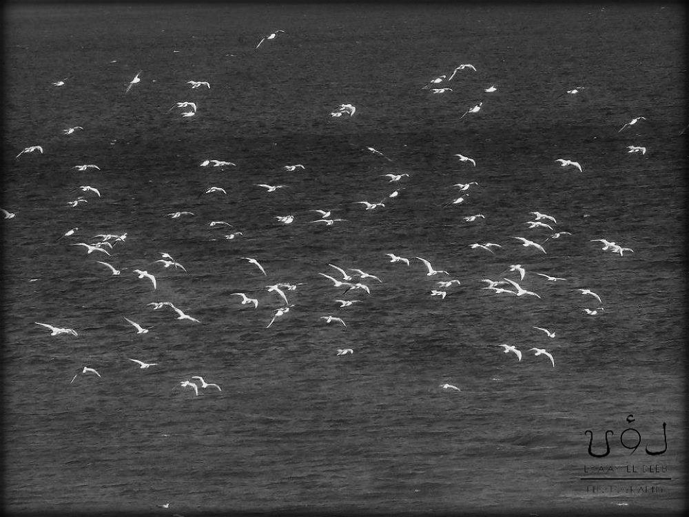 just birds on the sea by loaayeldeeb