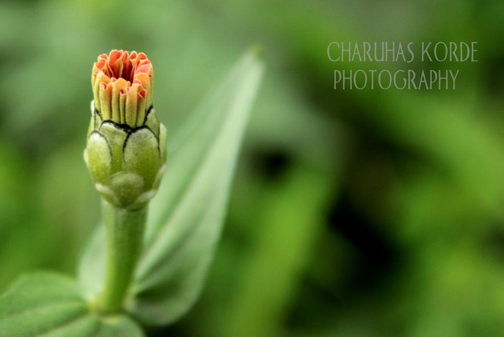 zenia unfolds!! by Charuhas Korde