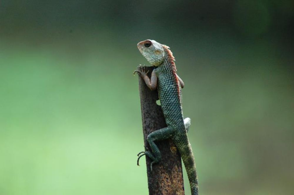 looking at u.... by Arghya Bhakta