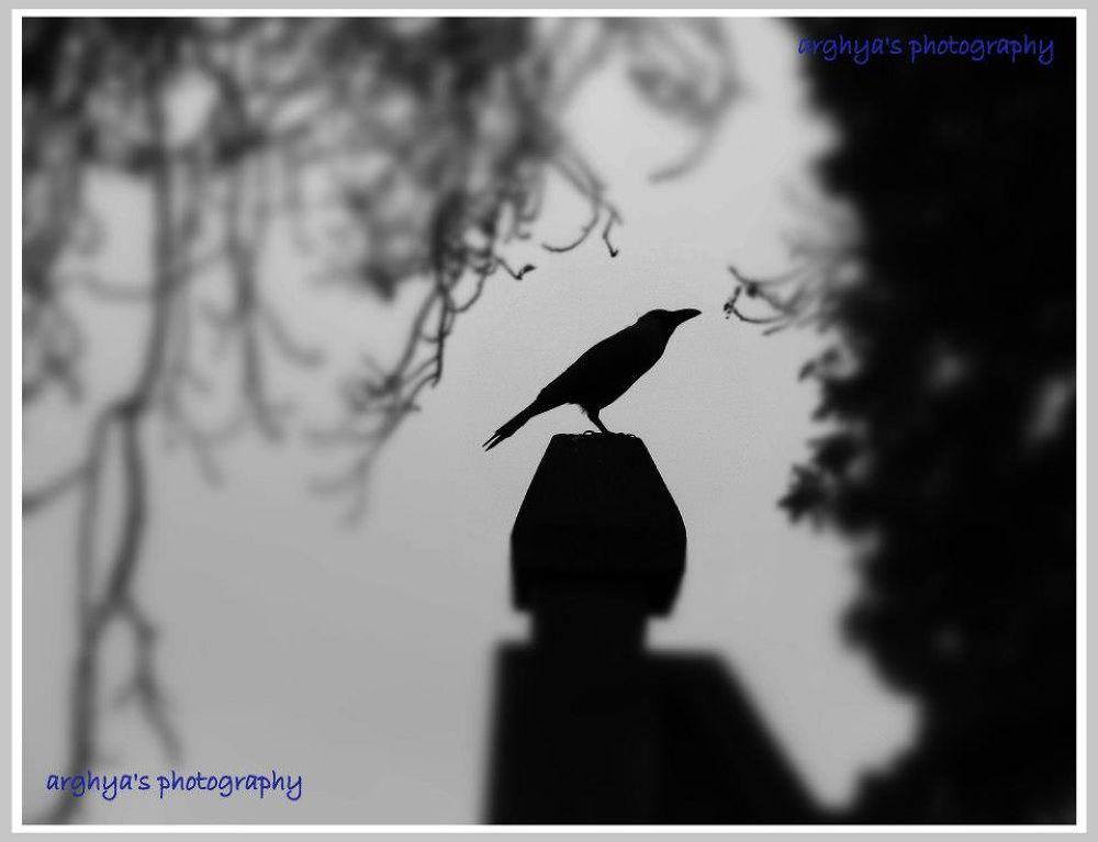 bird by Arghya Bhakta
