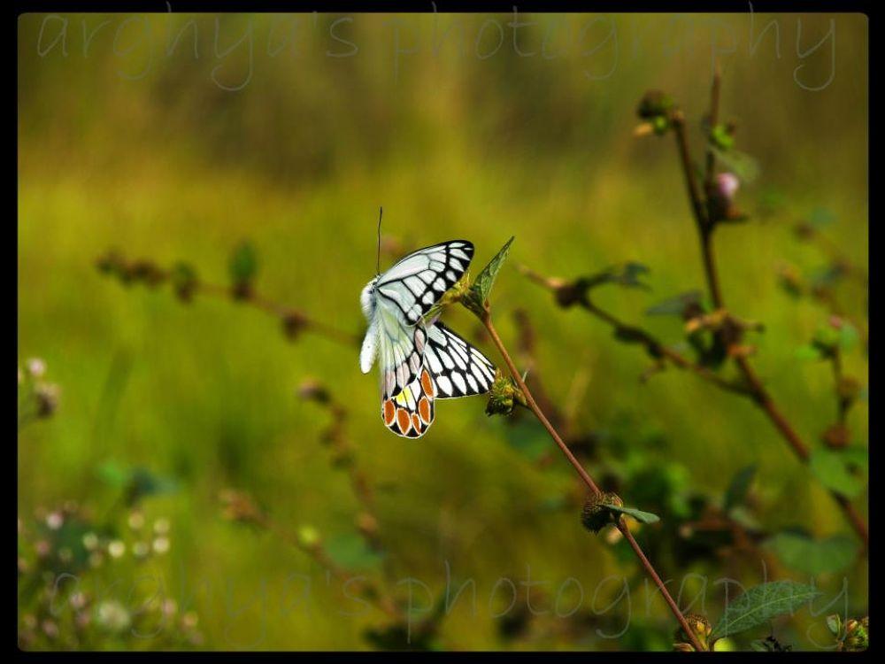 nature creats this beauty... by Arghya Bhakta