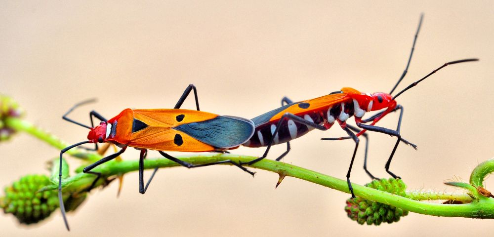 Beautiful Insect by toknujumbelalang