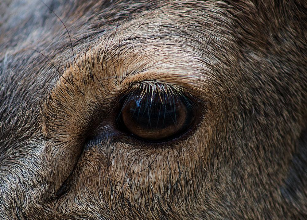 Eye by Leo Walter