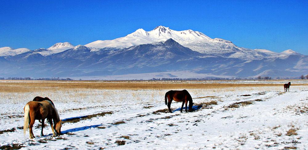 Yılka Atları by alirizabaykan