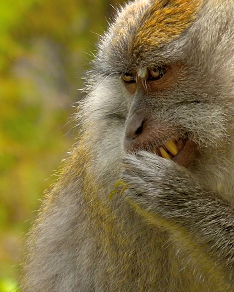 Monkey EDY_1829_843.JPG  by eddylowck