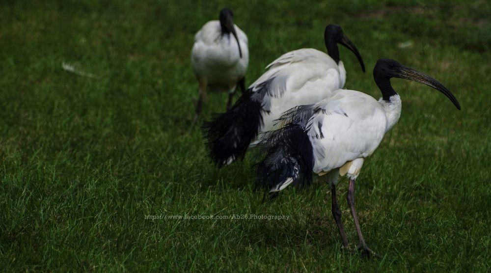 Vultures! by Abhishek Kumar