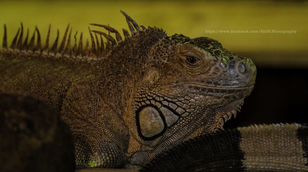 Photo in Animal #nikon #d5000 #animal #reptile #uk #nature #longleat #safari #travel