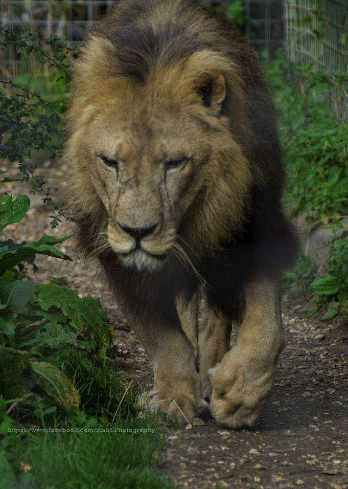 Jungle King....! by Abhishek Kumar