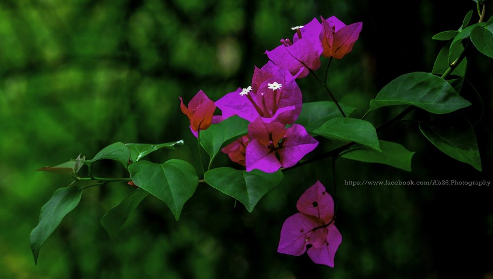Pink Stands Out....! by Abhishek Kumar