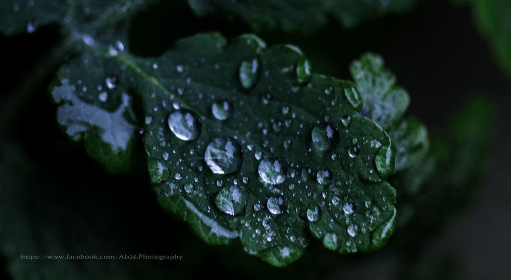 Photo in Nature #nikon #d5000 #nature #leaf #green #water #drops #uk #southampton