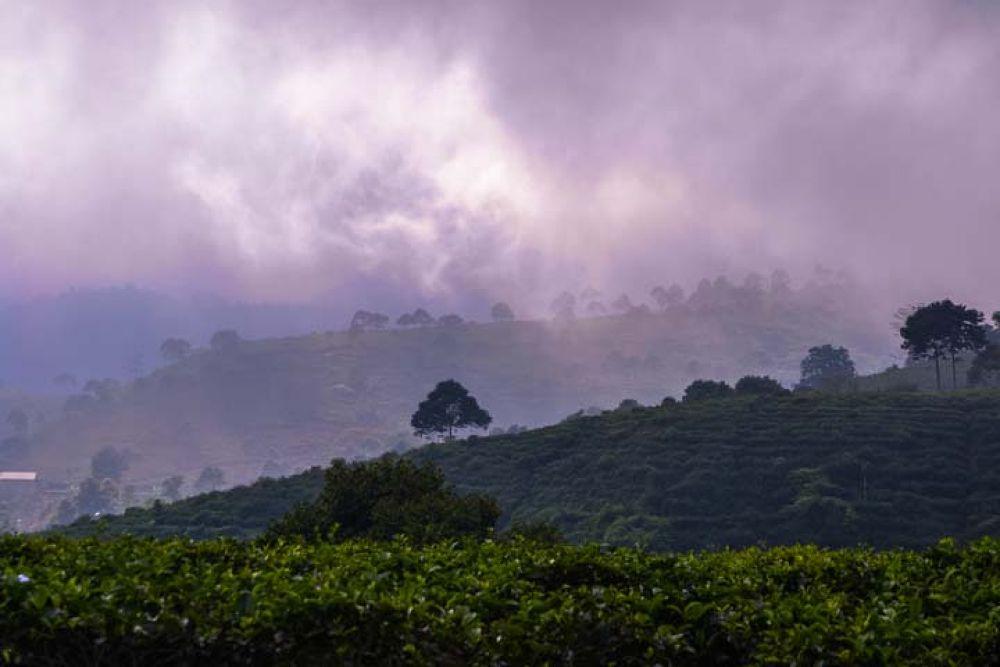 Kemuning tea garden Solo, Indonesia by gnyomi