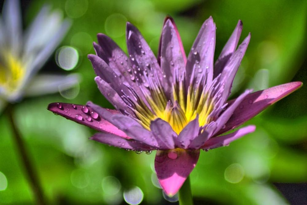 flower by gnyomi