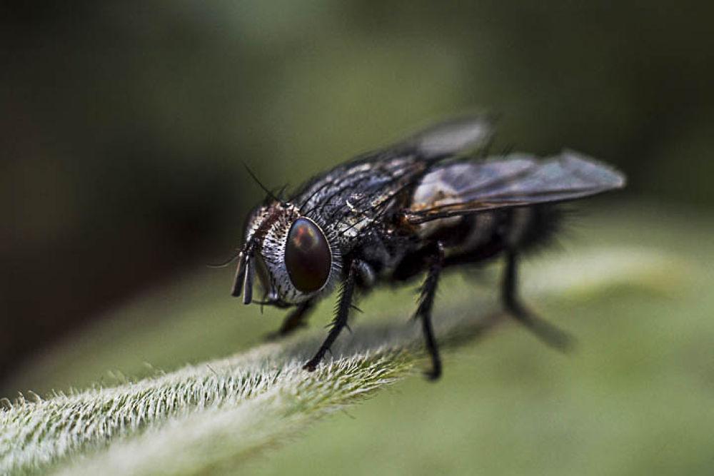 flies by gnyomi