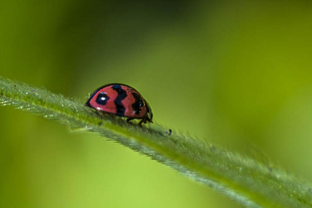 bug by gnyomi