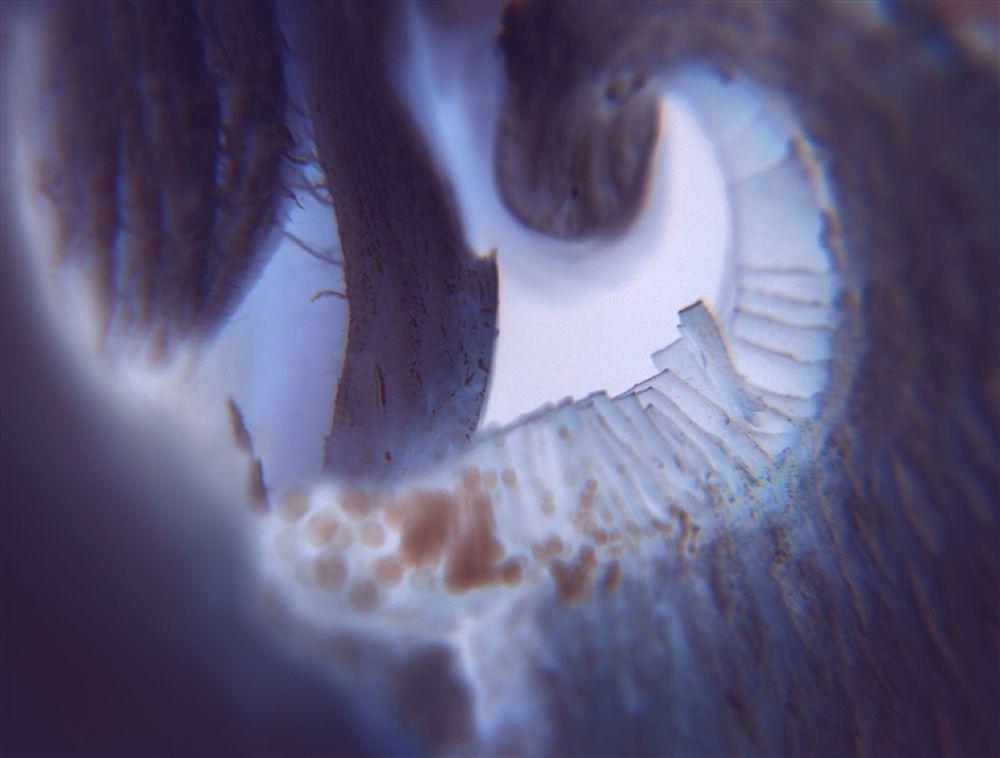 sieniäää by outidebnam