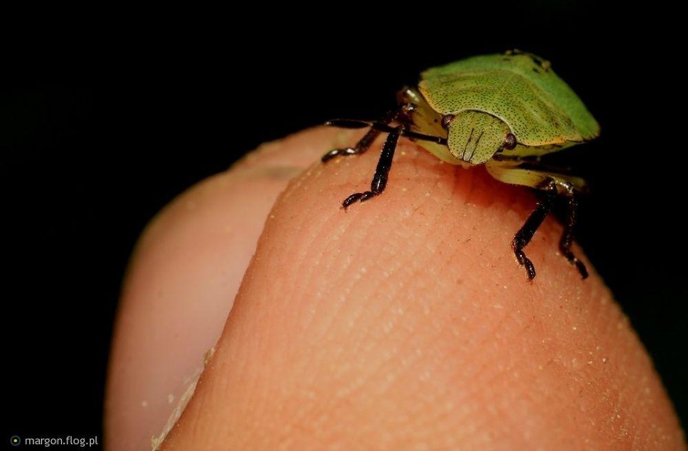 Little green friend by Margonis