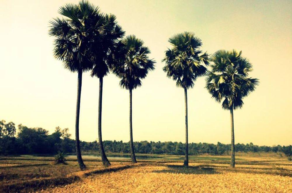 Taal Tree by Pradyut Mondal