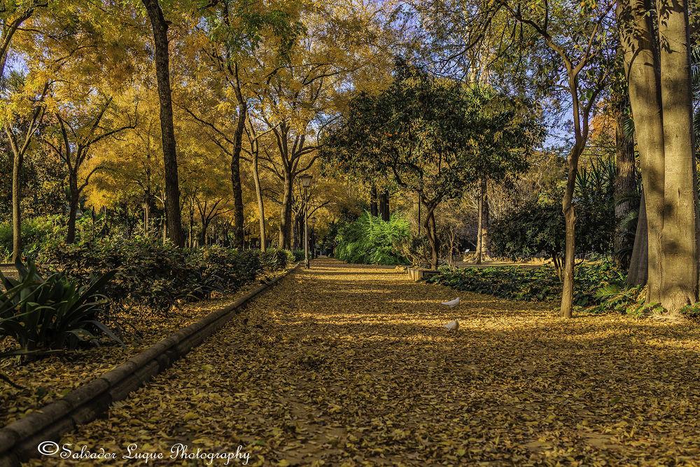 Parque de Maria Luisa. Sevilla. Spain by Salvador Luque García