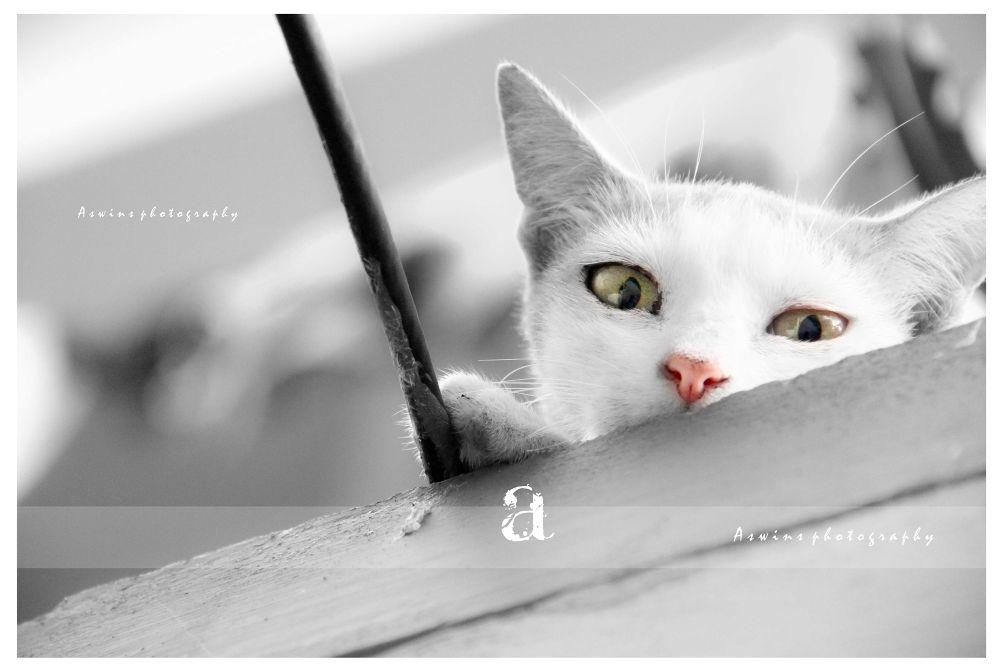lovely eyes by aswinsphotography