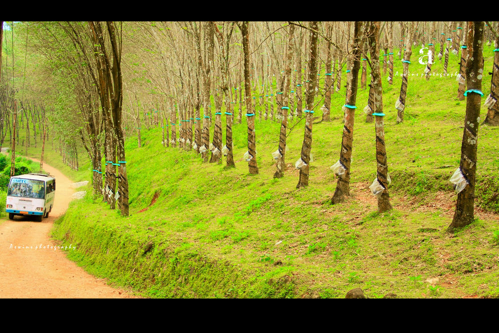 Photo in Random #travel #bus #nature #green #kerala