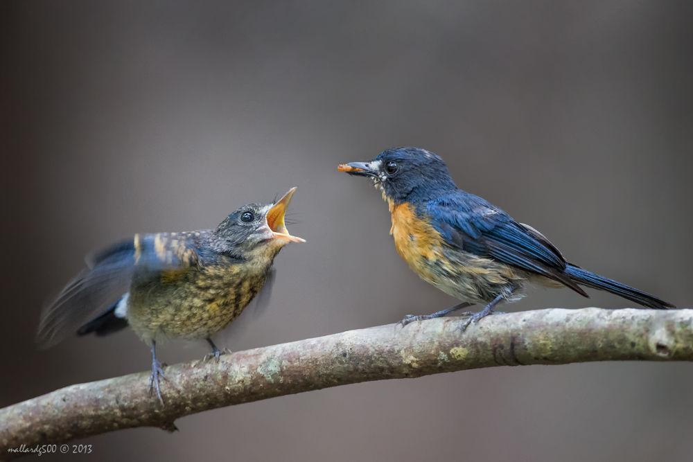 Feed me! Feed me ma! by Phoo Chan
