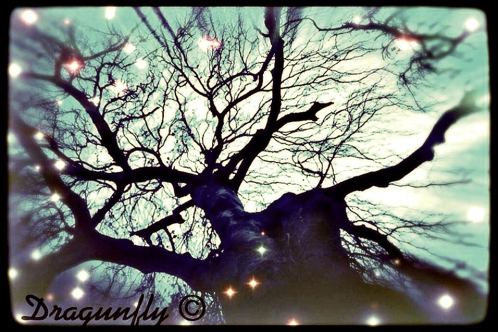 Twinkle Willow Tree by Dragunflymaster