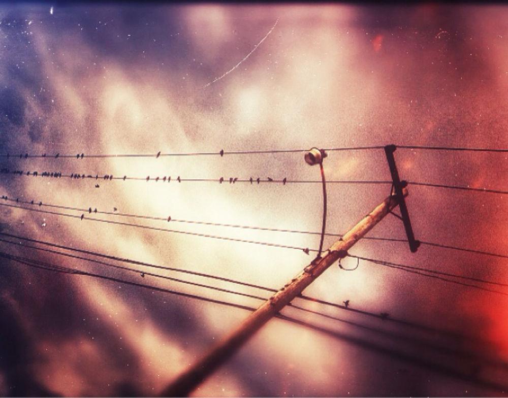 Bird on a wire by Dragunflymaster