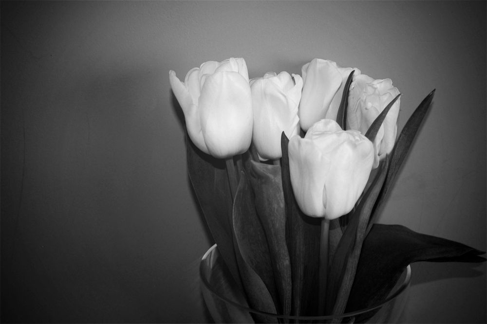 """Tulips"" by memiuri"