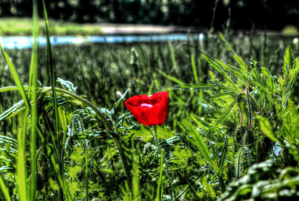 Red Flower  by Önder Güzel