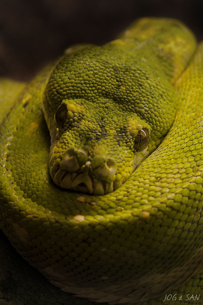 Snake eye by JOGdSAN