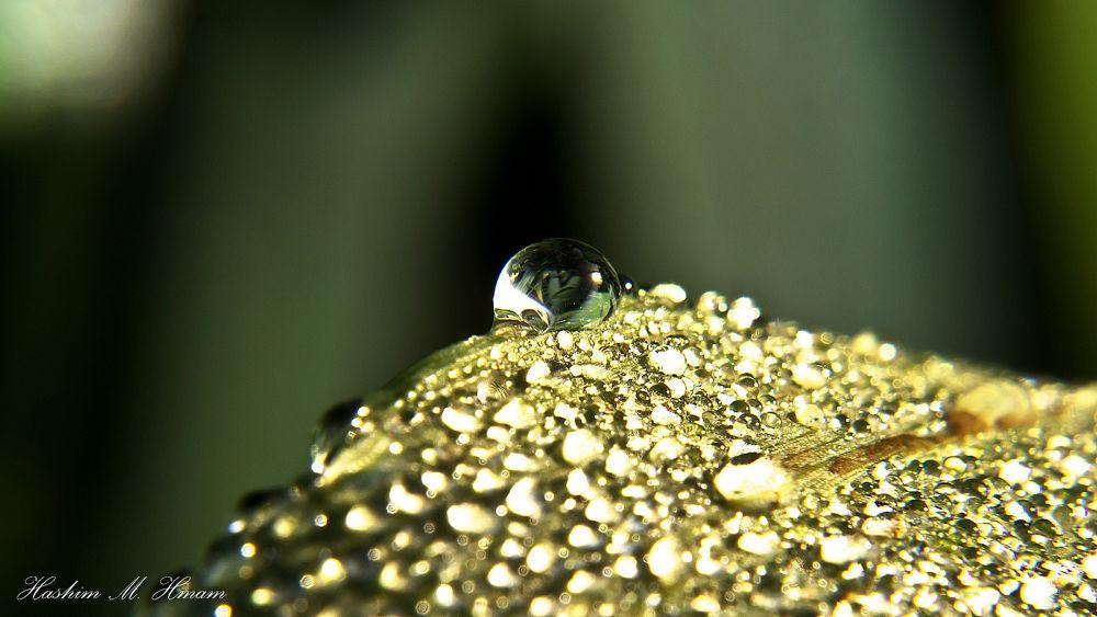 Drops.jpg by Hashimhmamphotography