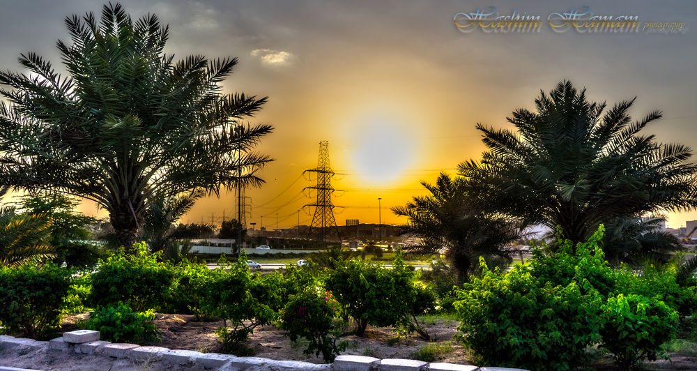 Date trees at sunset. Kuwait by Hashimhmamphotography