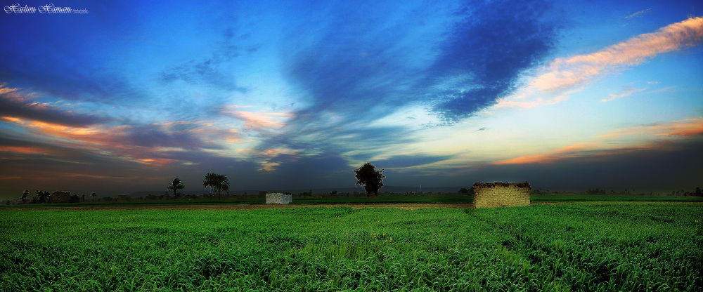 wheat filds by Hashimhmamphotography