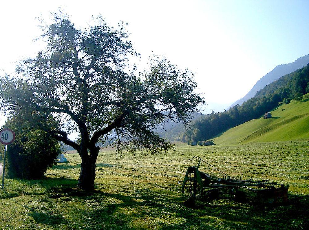 Austrian-meadows-with-Alpine-scenery (1).jpg by dodo