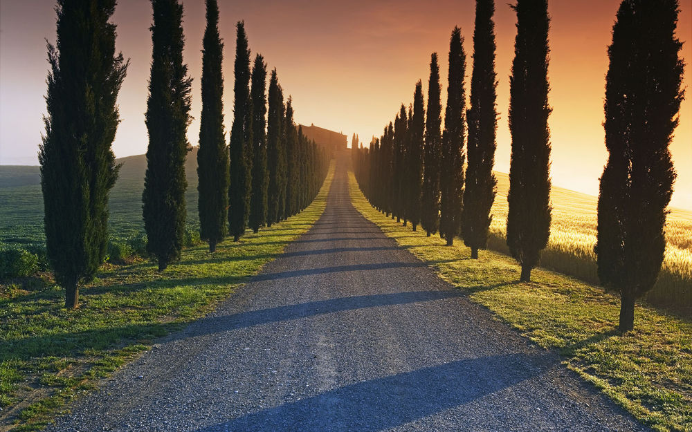 The Mysterious Road like Life by dodo