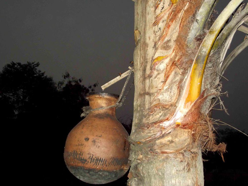 Juice of Date tree by sumonjhbd69